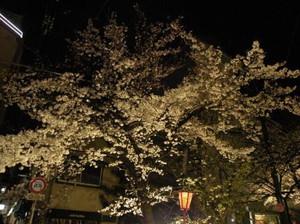 20120406_yozakura