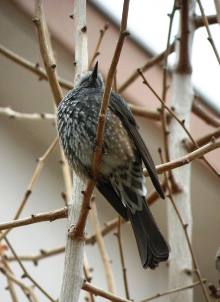 20130322_bird01_m