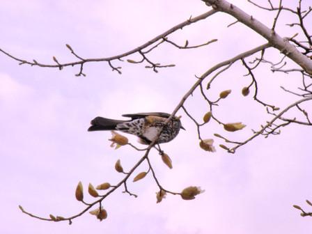 20130323_bird01_m