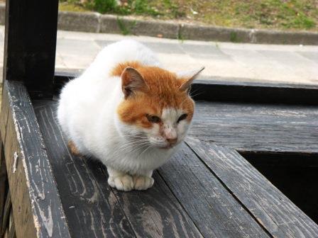 20130322_cat01