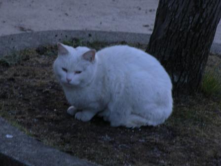 20130419_cat02
