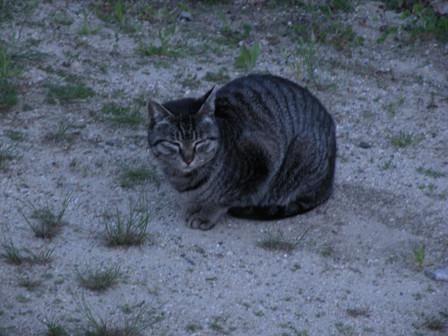 20130419_cat04