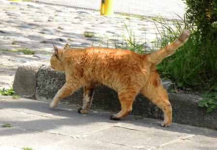 20130416_cat03
