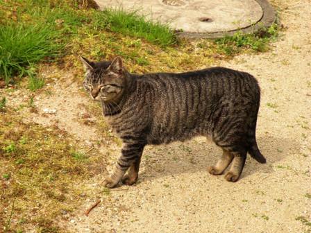20130417_cat01