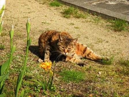 20130428_cat01