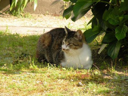 20130428_cat02
