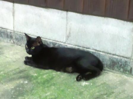 20130913_cat02