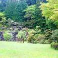10お庭の風景