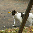 Cats09