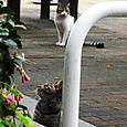 Cats13