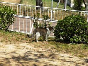 20120406_cat